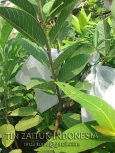 fruits cover pembungkus buah